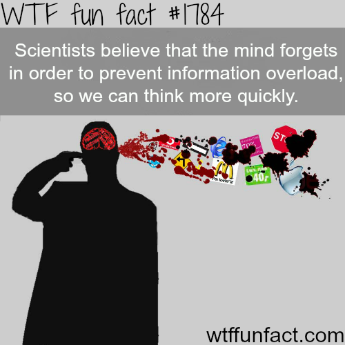 information overload wtffunfact