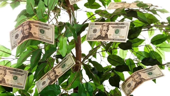Server Maintenance Costs Money tree
